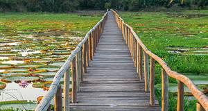 Ecotur Pantanal